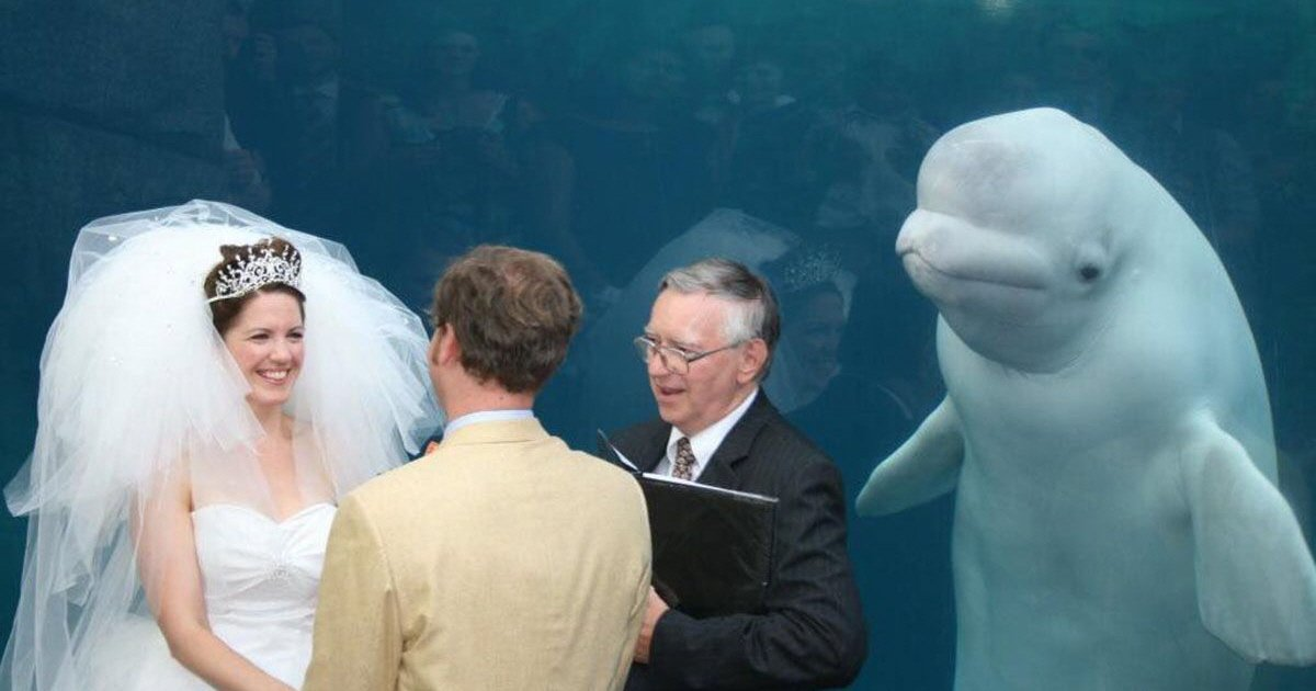 whale gate crashes couples wedding 1488192957.jpg?resize=412,232 - '불청객' 돌고래가 결혼식에 참여했을 때 벌어지는 일 (사진 15장)
