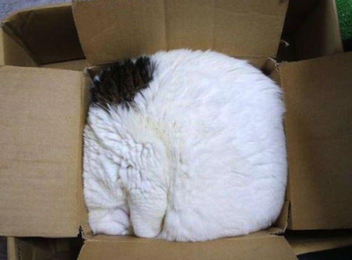15 photos proves cats life motto fits sits 5981b21a673bd zZh4i  700 - 15 photos that proves cat