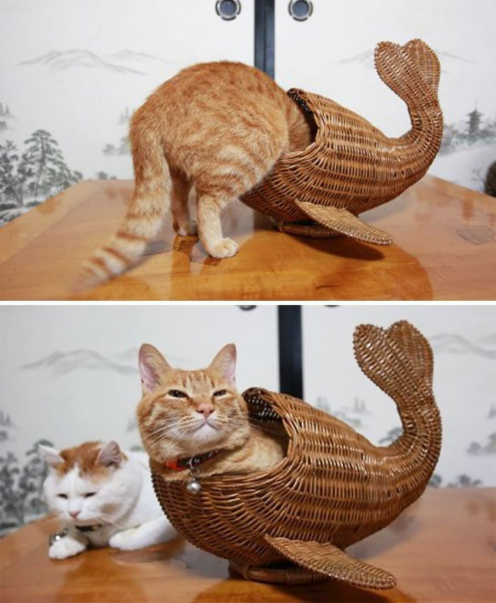 15 photos proves cats life motto fits sits if it fits i sits 9 163 59830b8d98c68  700 - 15 photos that proves cat