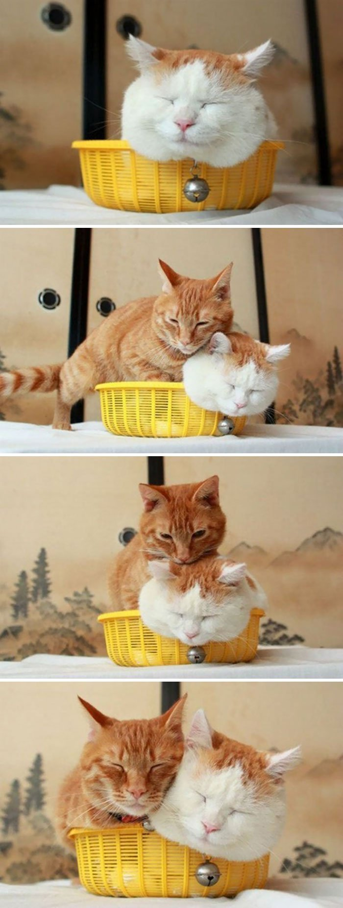 15 photos proves cats life motto fits sits if it fits i sits 9 172 598329b67adba  700 - 15 photos that proves cat