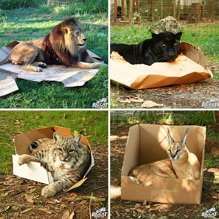 15 photos proves cats life motto fits sits if it fits i sits 9 179 59915984cdc80  700 - 15 photos that proves cat