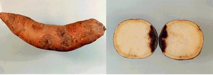 2 29 - 잘못 먹으면 건강에 '독'이 될 수 있는 10가지 음식