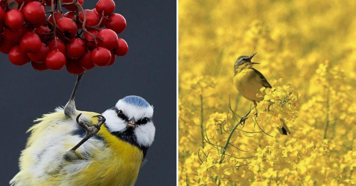 2017-best-bird-photo