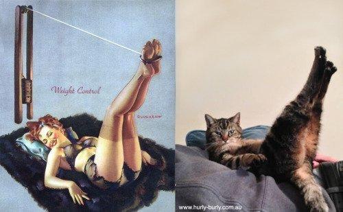 22 1 2.jpg?resize=300,169 - 20隻如同「海報女郎的妖嬌貓咪」,娥娜多姿的曲線「完美演繹五零年代」的嫵媚甜心!