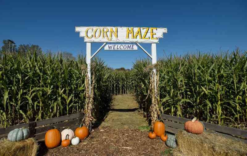 3 bedrock roanoke.jpg?resize=300,169 - Parents Leaves 3-Year-Old Son In Corn Maze Overnight; The Reason Confuses Everyone.