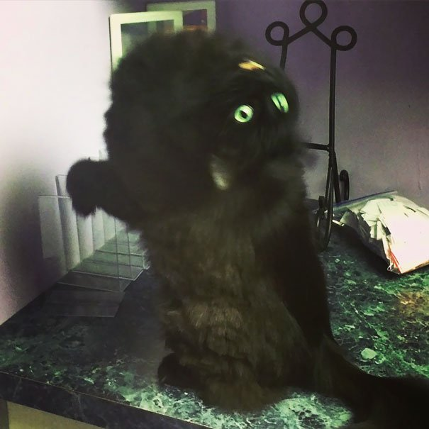 Possessed Cat