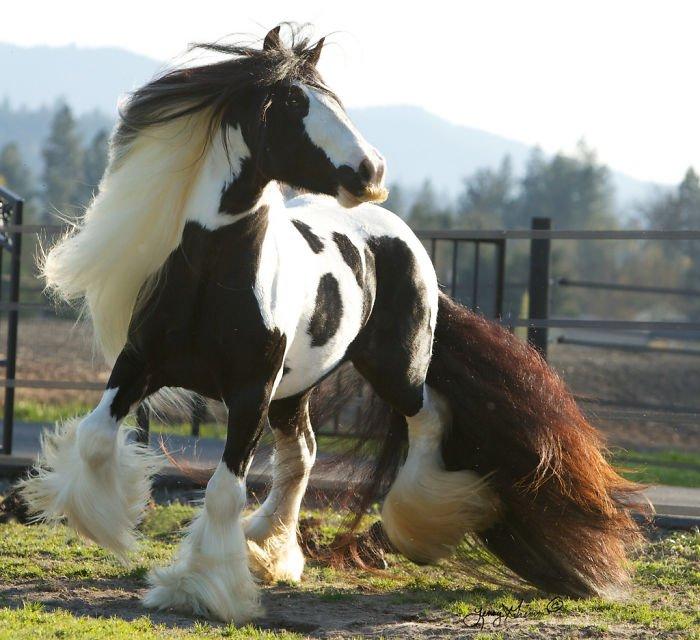 40 - Essas fotos de cavalos com bigode vão te tirar da bad