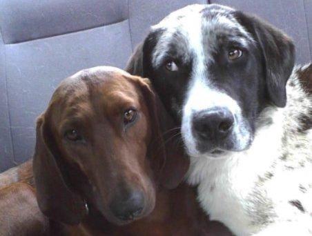 54 1 e1507893971690 - A história dos cachorrinhos que não queriam se separar na hora da adoção