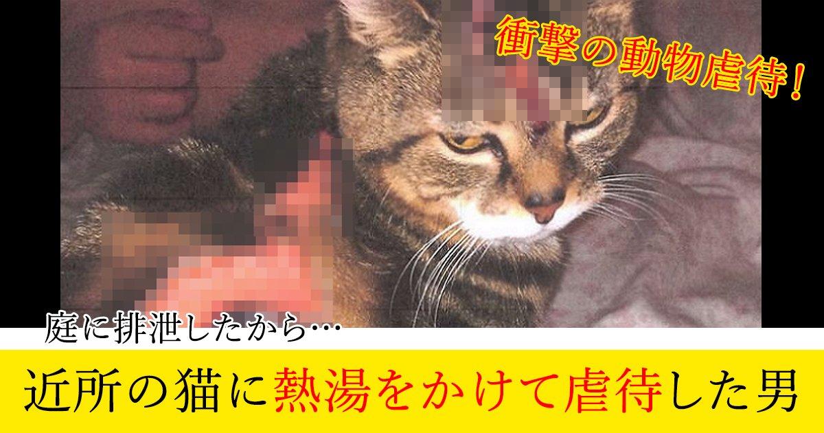 88 2 1.jpg?resize=1200,630 - 庭に排泄したから…近所の猫に熱湯をかけて虐待した男