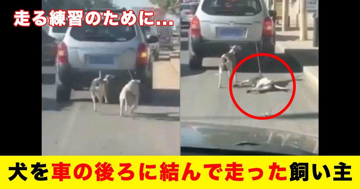 88 32.jpg?resize=412,232 - 走る練習のために...犬を車の後ろに結んで走った飼い主