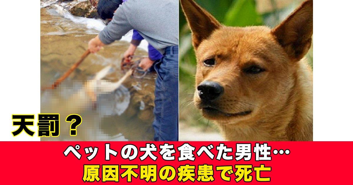88 35 - ペットの犬を食べた男性…原因不明の疾患で死亡