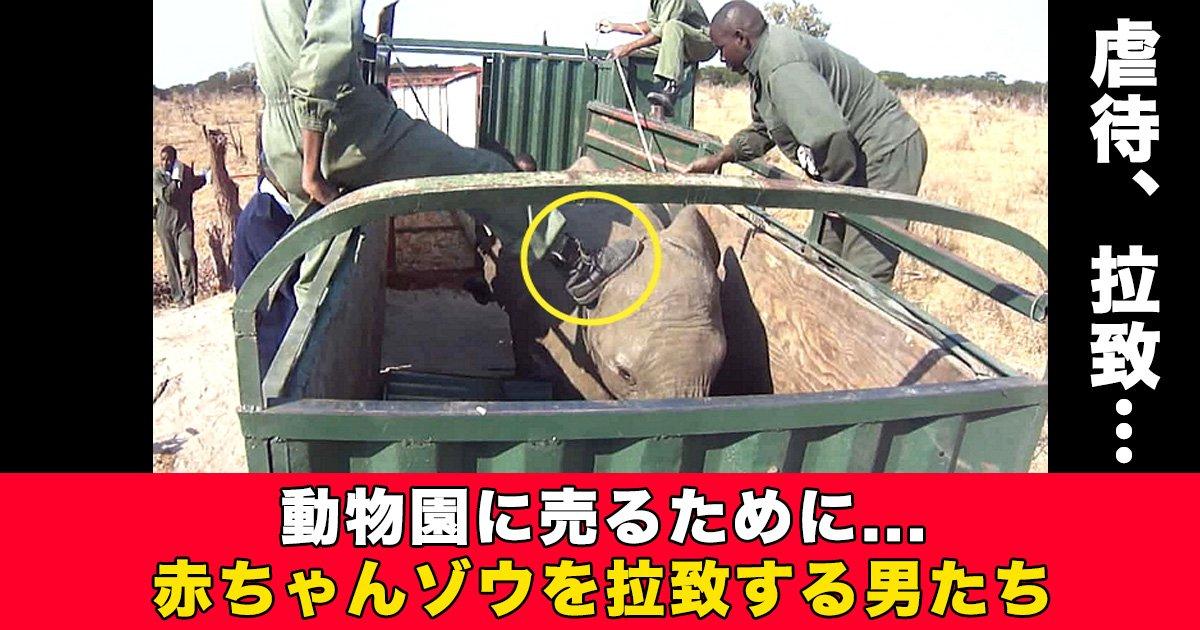 88 38 - 動物園に売るために赤ちゃんゾウを拉致する男たち【動画あり】