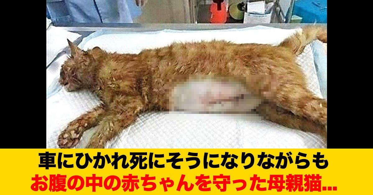 88 60.jpg?resize=412,232 - 車にひかれ死にそうになりながらも、お腹の中の赤ちゃんを守った母親猫