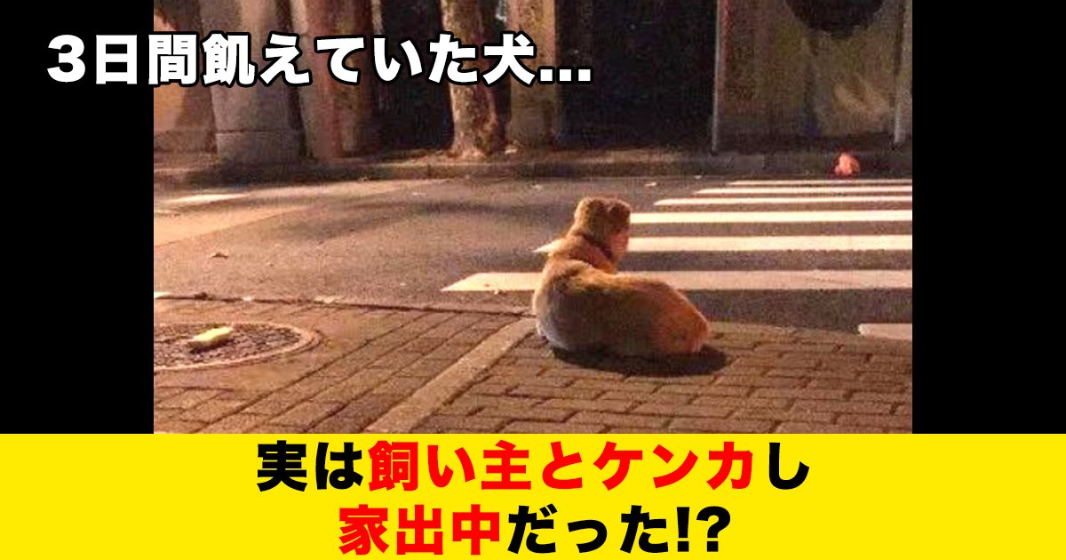 88 69.jpg?resize=300,169 - 3日間飢えていた犬、実は飼い主とケンカし家出中だった!?