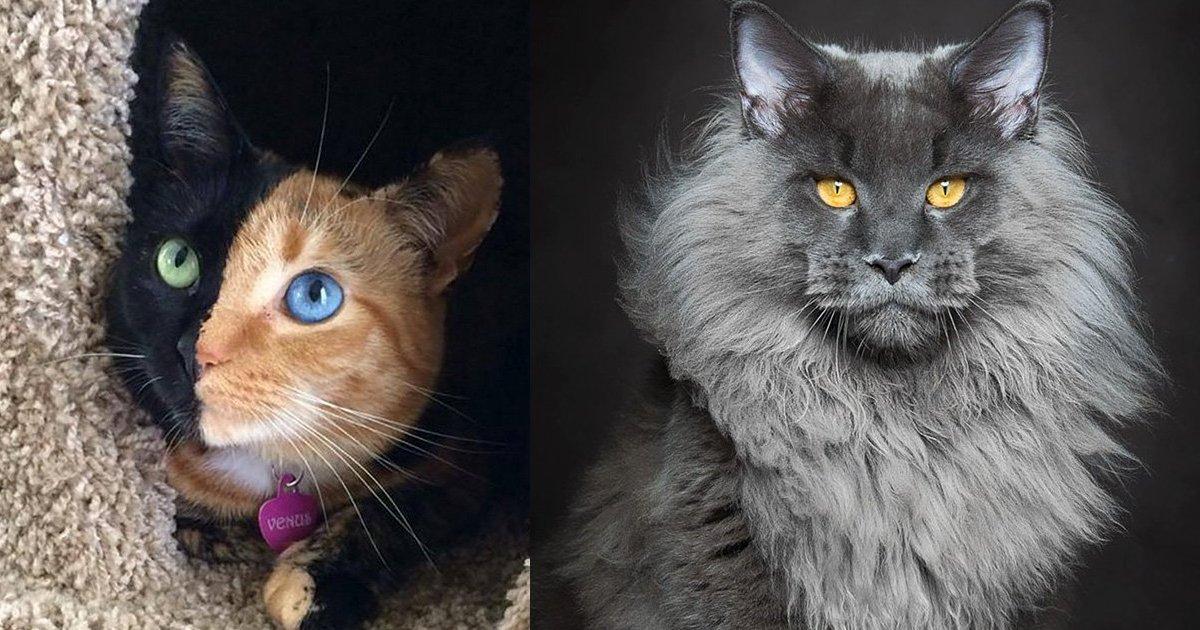 89549 0 620 3.png?resize=412,232 - 外媒票選出「15隻地表最美貓咪」各個都像神仙下凡!#第3隻的瞳孔裡根本有璀璨銀河!