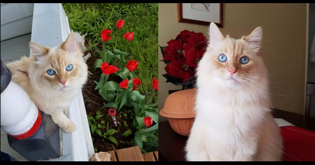 aaaa 1 - The Moment This Owner Discovers His Cat is Actually a Disney Princess
