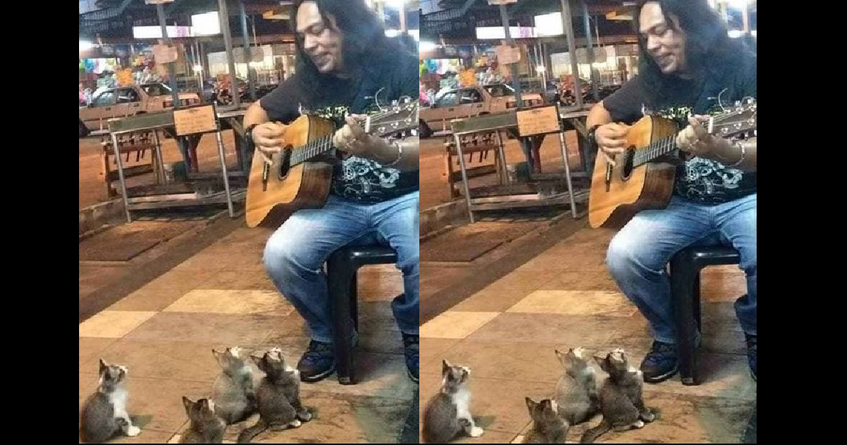 adfafd - Street Musician's Serenade to His Little Crowd Is the Most Adorable Video Ever