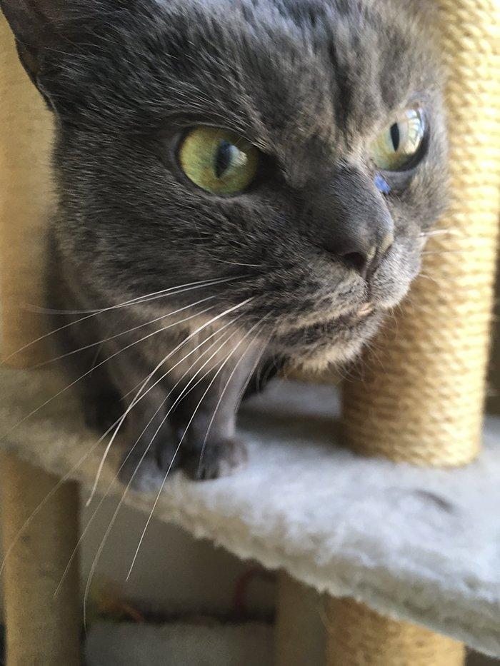 always-angry-cat-shamo-19-59afa0b29c4da__700