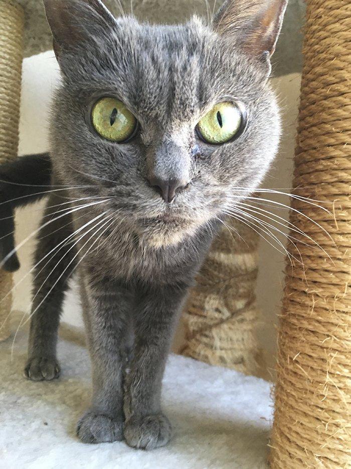 always-angry-cat-shamo-26-59afa0c4a197d__700