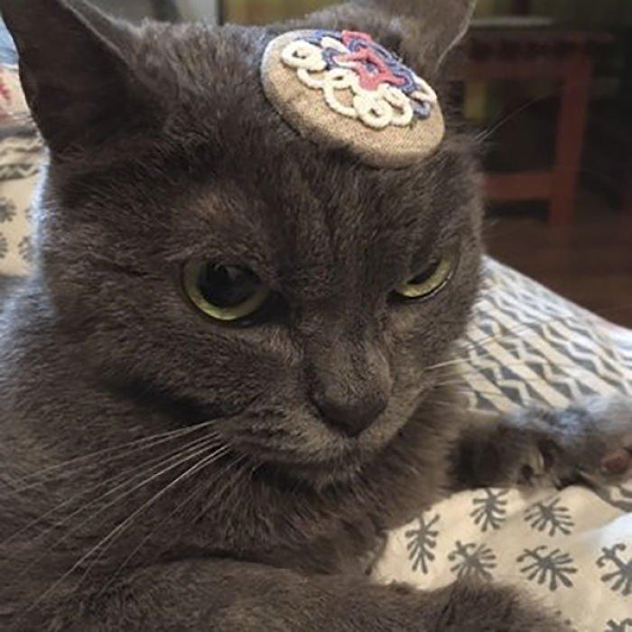 always-angry-cat-shamo-28-59afa0ca74c17__700