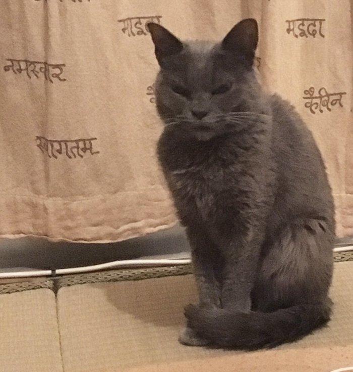 always-angry-cat-shamo-5-59afa0da6f2f5__700