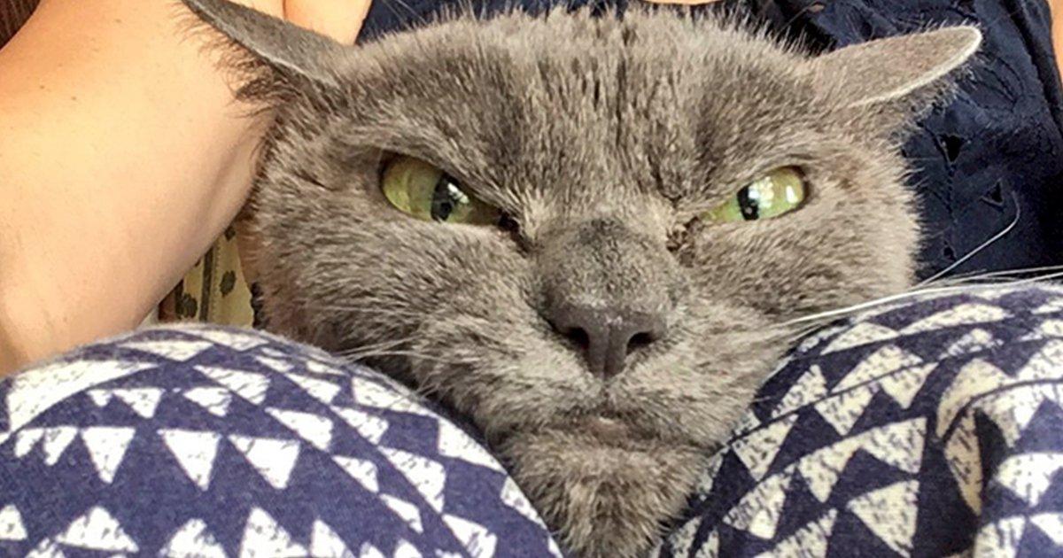 always-angry-cat-shamo-fb