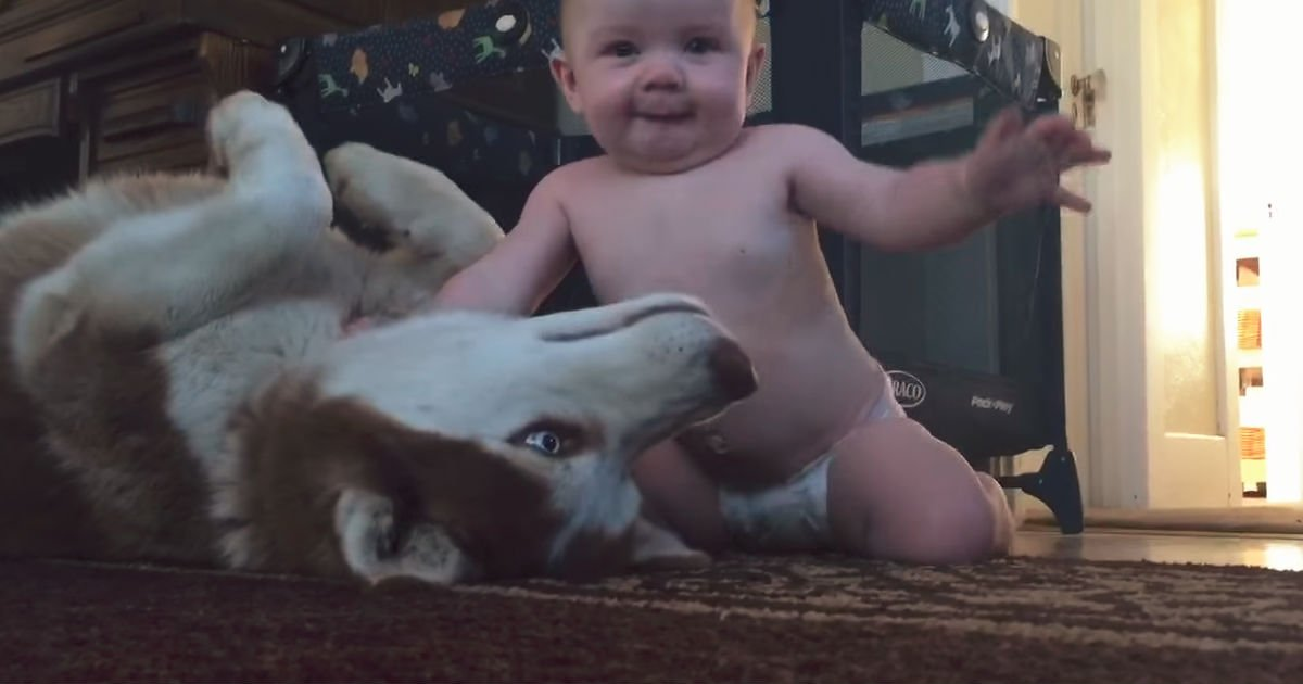 baby and husky.jpg?resize=300,169 - Forget Stuffed Toys, Your Baby Will Love Playing With a Real Life Husky Instead