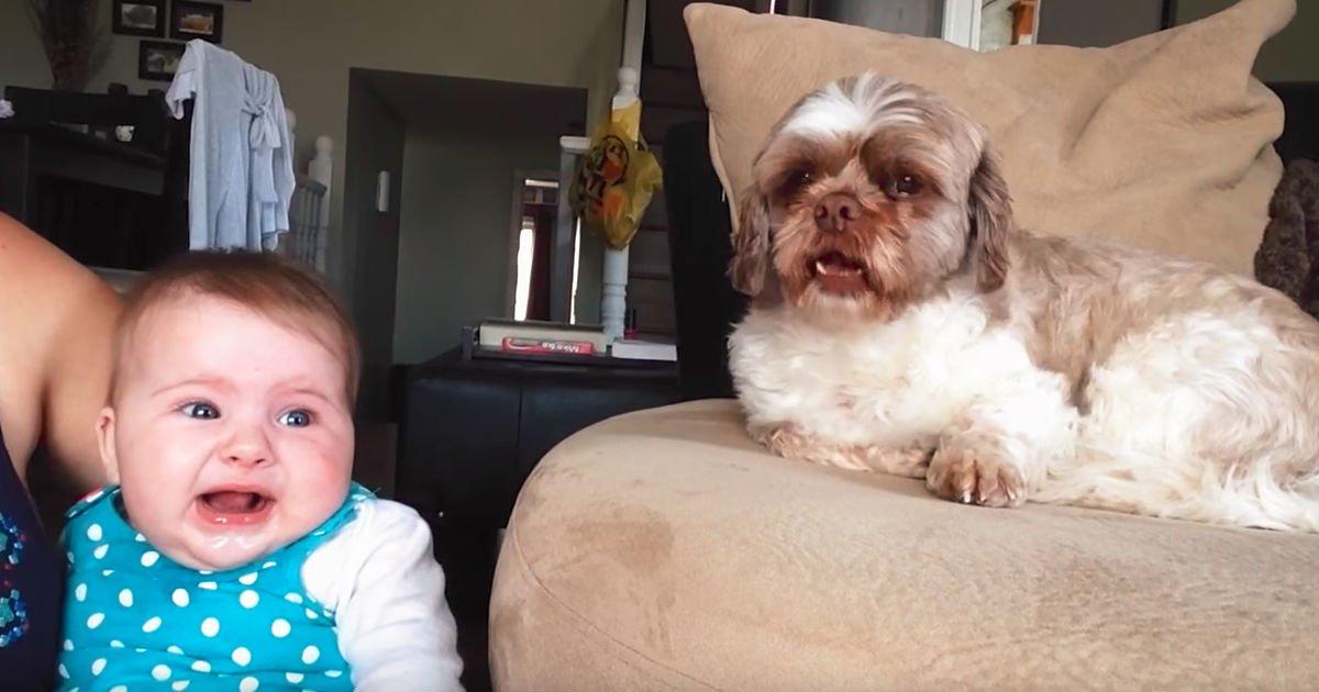 baby-dog-argue
