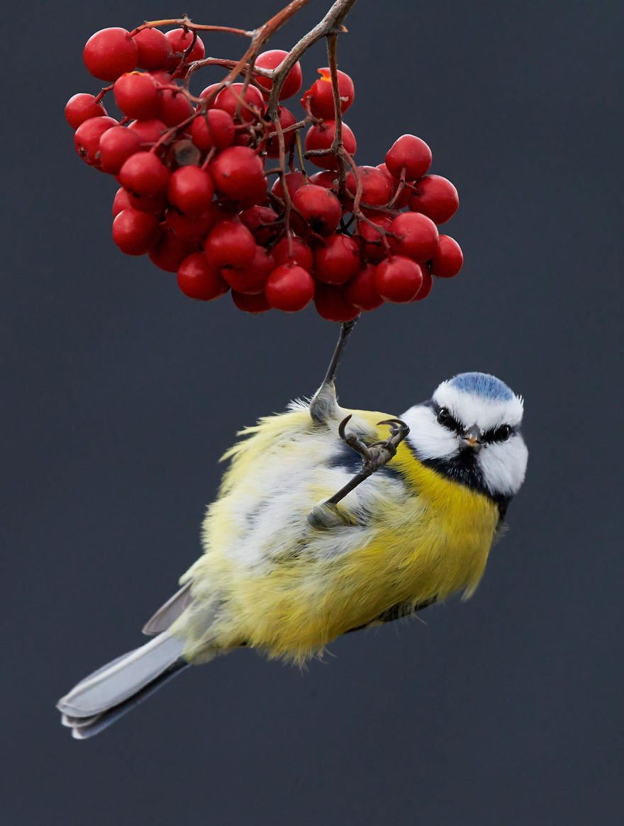 bird photographer of the year 2017 29 59ad0ae662851 jpeg  880.jpg?resize=412,232 - 10 Best Bird Photos Of 2017: They're Truly Amazing