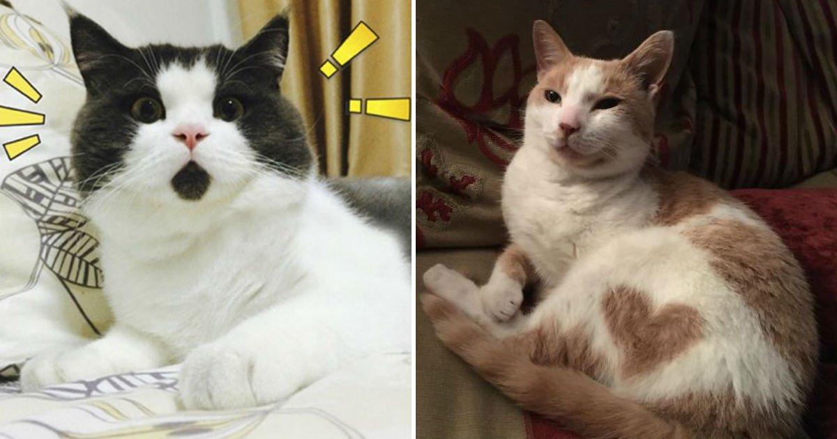 cat-cool-pattern