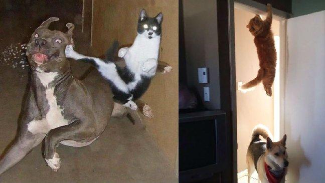 cat ninja.jpg?resize=300,169 - 20張證明「貓咪是忍者後代」的照片!飛簷走壁加隱身術讓網友爆笑:「可能連功夫都難不倒!」