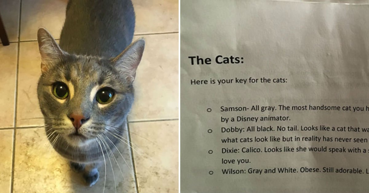 cats descriptions by owner - A Cat Owner Describes Her Four Cats To Help Her Cat-Sitter And It's Hilarious!
