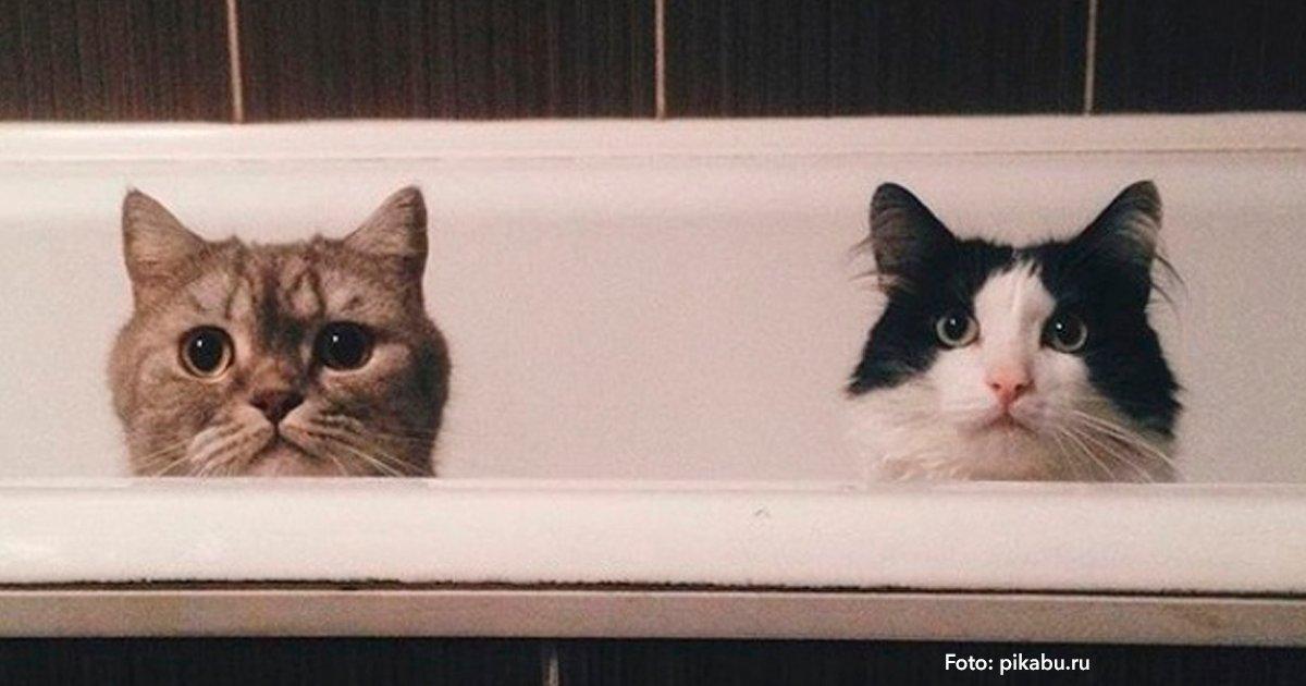 cover 16.png?resize=1200,630 - 15 adorables mascotas que no pueden vivir un solo instante sin sus dueños.