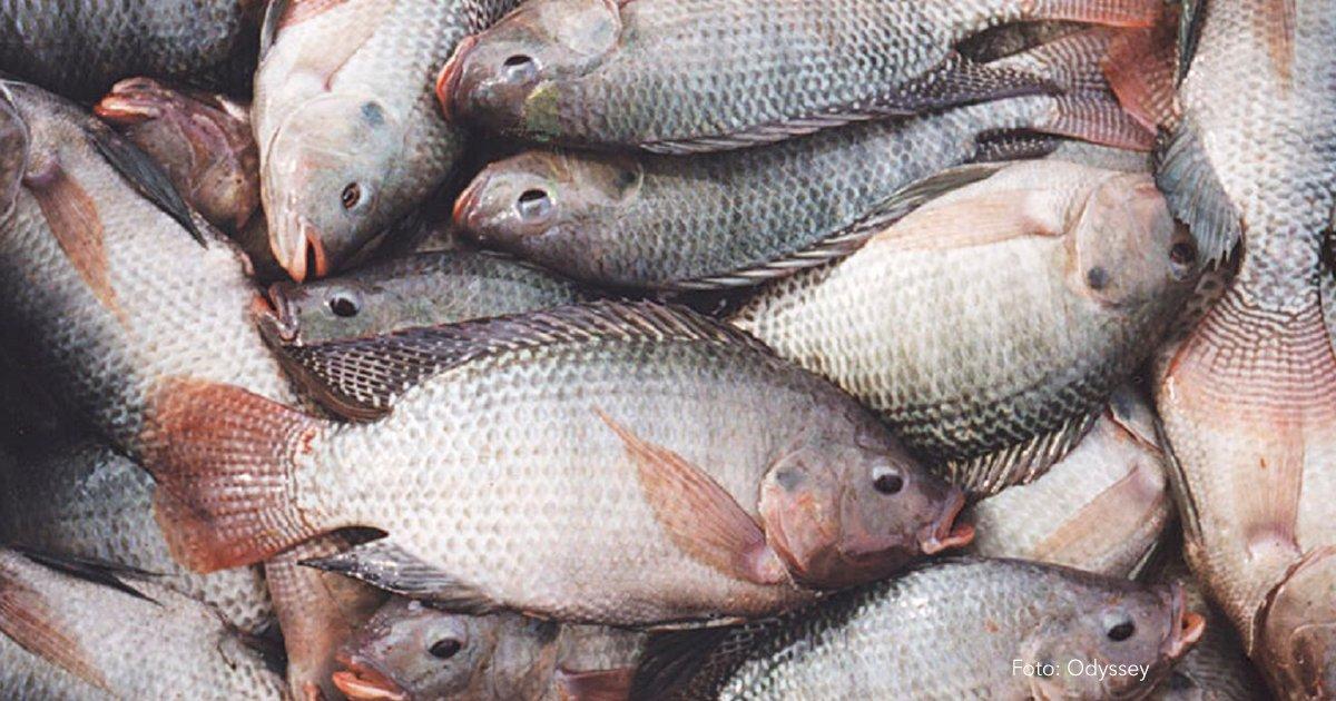 cover 7.png?resize=412,232 - Los 9 pescados que debes de consumir con cuidado