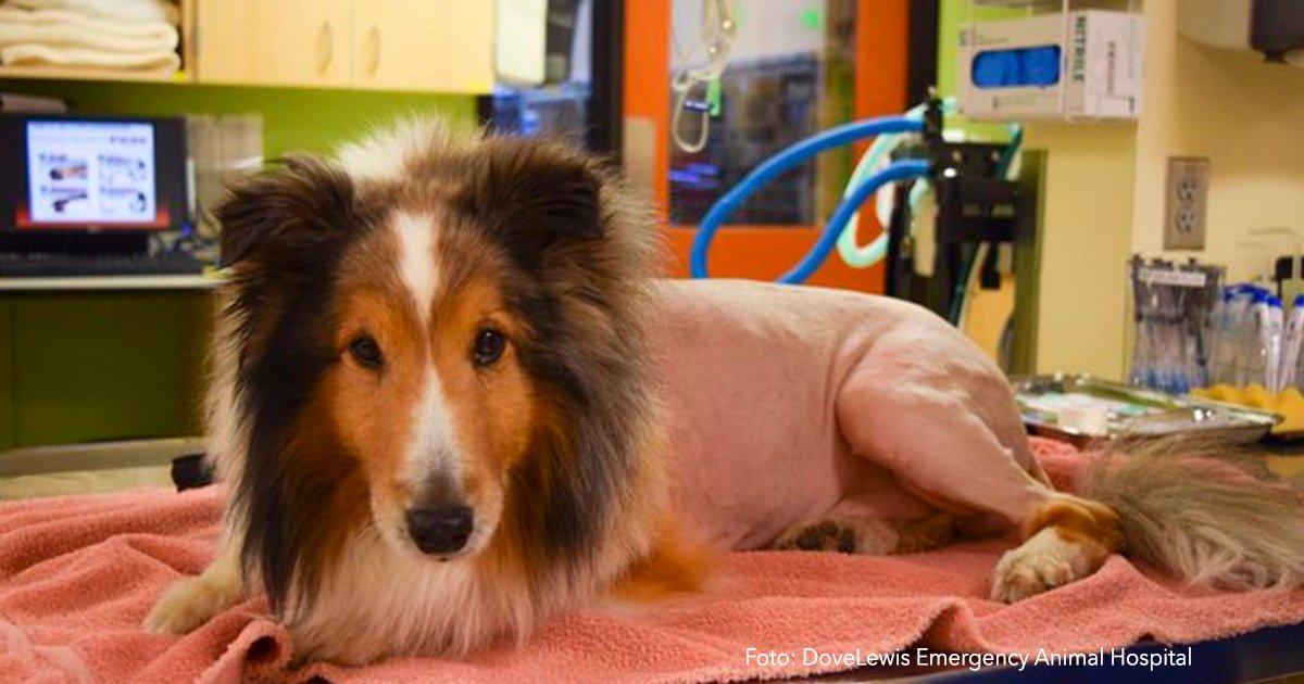 cvr6.jpg?resize=300,169 - Iban a sacrificar a este adorable perrito que sufría parálisis, cuando descubrieron algo impresionante.