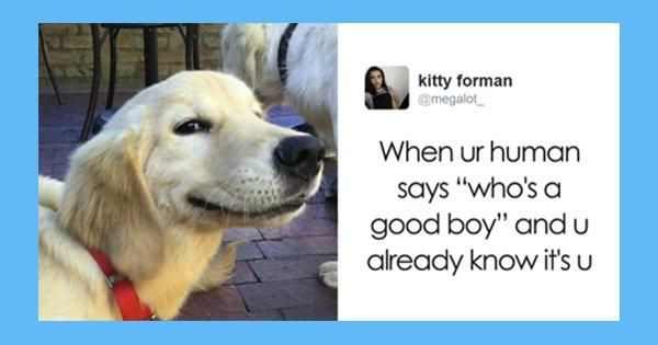 dog-6