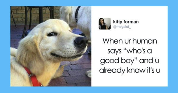 dog 6.png?resize=648,365 - 15 Of The Best Dog Tweets Ever... You Might Bark With Laughter