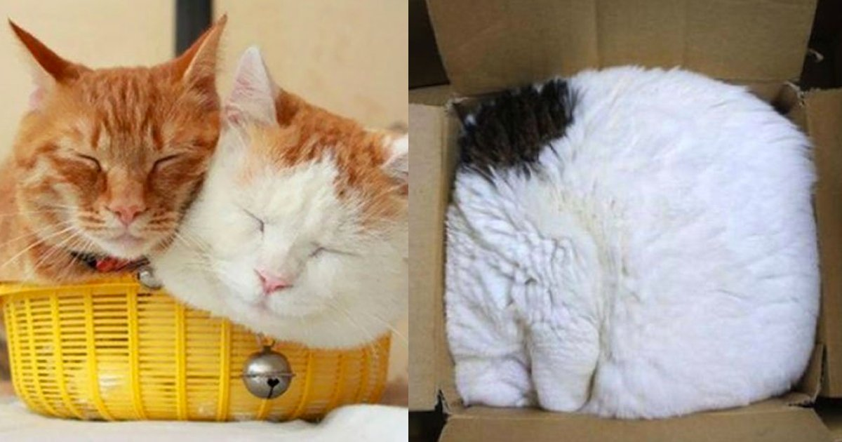 e69caae591bde5908d 1 2 - 10張照片證明「塞進去就對了!」是貓咪的座右銘,網友笑到嫑嫑:「果然真的是液體」XD