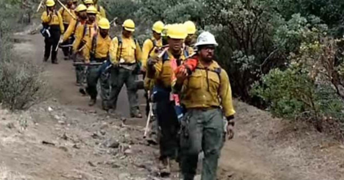 ec9db4eba684 ec9786ec9d8cfacedsfdfsdfsdf.jpg?resize=300,169 - Firefighters Emerge From The Forest While Singing Touching Song That Goes Viral