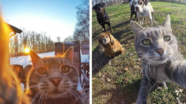 ec9db4eba684 ec9786ec9d8cresfs aersdfdfassdf.jpg?resize=1200,630 - 男子意外發現「自己的貓會自拍」,神乎其技網友讚嘆:「還會揪朋友一起拍照可愛!」