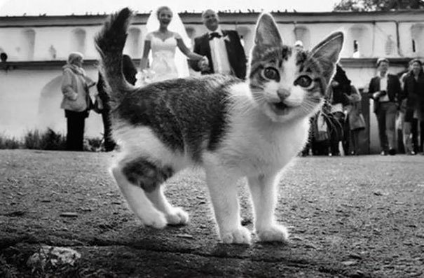 funny-cat-photobombs-107-58e391af88916__605