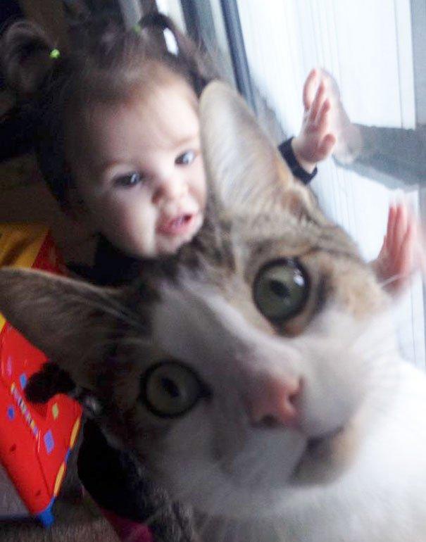 funny-cat-photobombs-18-58e248485b5bf__605