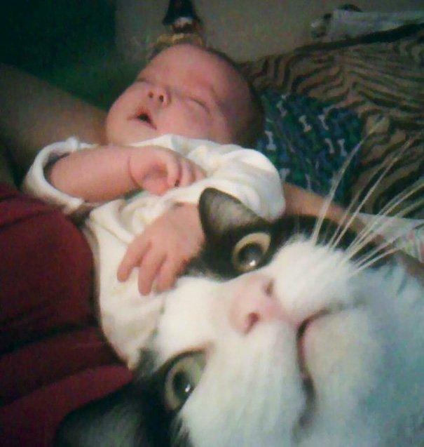funny-cat-photobombs-25-58e36ccf1a82d__605