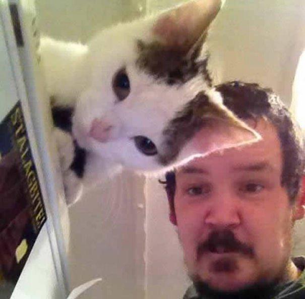 funny-cat-photobombs-26-58e37fd3d94da__605