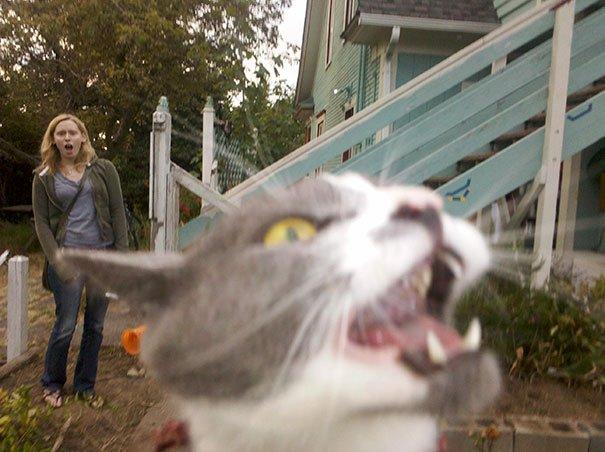 funny-cat-photobombs-30-58e385e4d2381__605