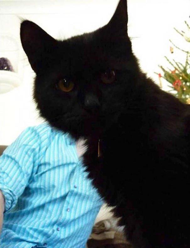 funny-cat-photobombs-31-58e3878aaa4b6__605