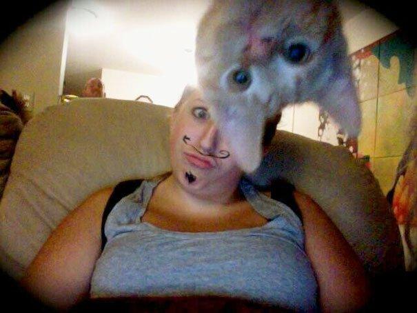 funny-cat-photobombs-33-58e38ed254124__605