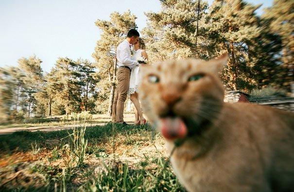 funny-cat-photobombs-56-58e60f5d64fa4__605-1