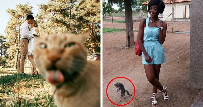 funny cat photobombs fb3  700 png.jpg?resize=412,232 - 10+ Times Cats Hilariously Photobombed Purrfect Shots