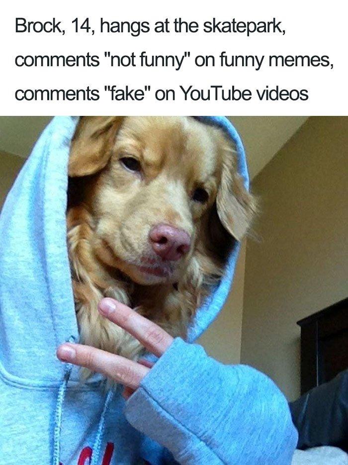 funny-dog-bios-70-59ad0f4a8264b__700